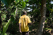 Francis Okiru, an organic farmer, walks through his farm in the Pallisa district of Uganda. Francis joined the Kulika project in 2003 and received sustainable organic agriculture training.