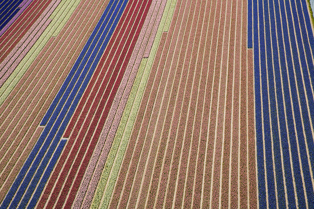 Nederland, Zuid-Holland, Hillegom, 16-04-2008; Historical flower bulb region, between AMsterdam and The Hague. Plots w. bulbs, partly in bloom (daffodils and hyacinths). De historische bollenstreek, percelen met bollen, gedeeltelijk in  bloei (narcissen en hyacinten).<br />