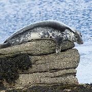 Cetaceans, Mammals,