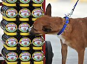 "© under license to London News Pictures. LONDON, UK  06/05/2011. Dogs Enjoying Marmite at Battersea Dogs and Cats Home today (06 May 2011). 100 Jars were delivered to the home as part of a prize. You either love it or hate it, but at Battersea, marmite is causing quite a stir amongst the dogs. Jars of the yeast extract, which has polarised the nation into lovers and haters, are polished off in no time by Battersea's canine residents who have developed quite a taste for the spread. Today 100 of the famous yellow topped glass jars will cause tails to wag in the kennels when they are delivered to the Home. The year's supply of Marmite is a rather unusual, but very welcome prize to Battersea Chief Executive Claire Horton who will be presented with one of the first ever Dogs Today Endal Awards for Services to Animals. Claire Horton who requested the prize for the dogs, in favour of the usual dog food awarded,  commented: ""Battersea dogs definitely 'love it' when it comes to Marmite. We like to provide our dogs with lots of different activities throughout the week to try and help them cope better in a kennel environment. One of the dogs' favourites is licking Marmite from chew toys - it keeps them entertained for hours."" Claire will be presented with her Endal Award by Marmite Brand Manager David Titman at the 2011 London Pet Show, taking place at Kensington Olympia, tomorrow, Saturday 7th May.Photo credit should read Stephen Simpson/LNP."