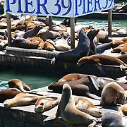 Sea Lions at Pier 39, San Francisco