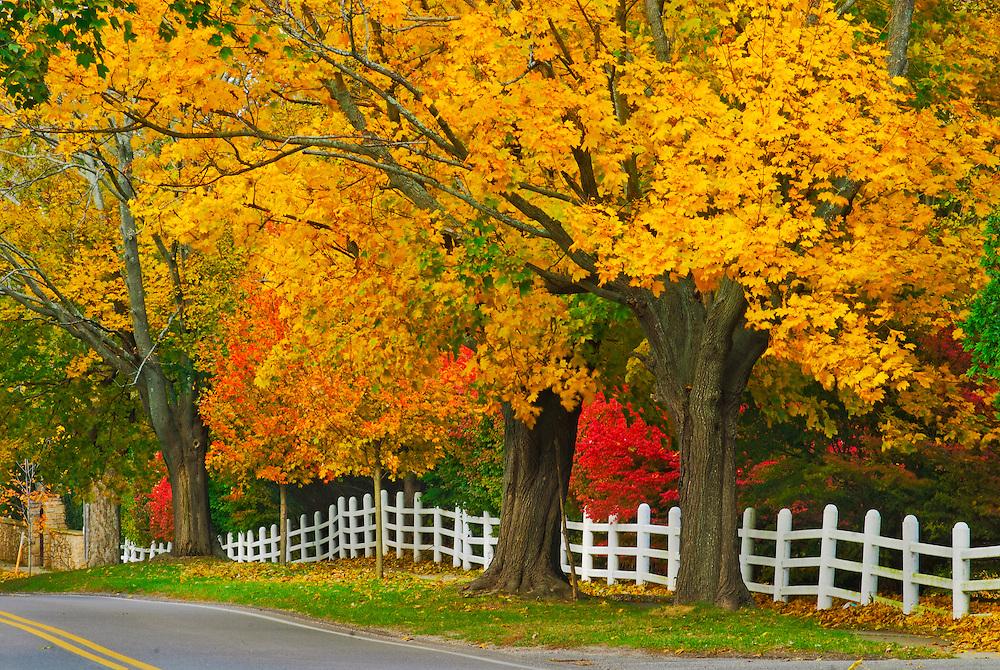 Long Island Foliage