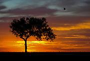 Sunset at the Wooden Bridge during the 2013 Texas Water Safari on Sun., June 9, 2013.<br /> Copyright 2013 Ashley Landis
