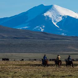 Cross Ranch/Centennial Cattle