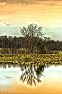 Lakeside Reflections - Broemmelsiek Park