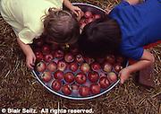 Bobbing for Apples, Apple Festival, Adams Co., PA