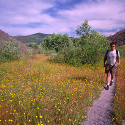 Hiker and Hairy Cat's Ear (Hypochaeris radicata), Hummocks Trail, Mt. St. Helens National Volcanic Monument, Washington, US, July 2004