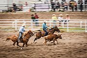 Steer wrestling at the Daddy of em all rodeo at Cheyenne Frontier Days.
