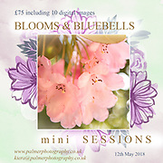 Blooms and Bluebells Mini Sessions
