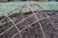 Frost on a hooped cage structure used to train clematis over in the summer