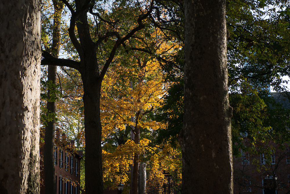 Leaves change color in College Green on October 31, 2016.