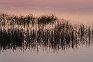 Marsh Grass, Georgia, Jekyll Island, Jekyll Club