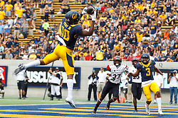 BERKELEY, CA - SEPTEMBER 12:  Wide receiver Darius Powe #10 of the California Golden Bears catches a pass for a touchdown against the San Diego State Aztecs during the second quarter at California Memorial Stadium on September 12, 2015 in Berkeley, California. (Photo by Jason O. Watson/Getty Images) *** Local Caption *** Darius Powe