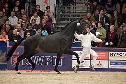 135 - NN<br /> KWPN Hengstenkeuring 2006<br /> Photo © Hippo Foto