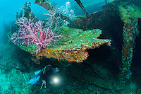 A Diver inspects a Soft Coral encrusted World World II shipwreck.<br /> <br /> Shot in Indonesia