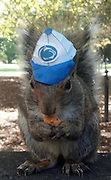 Squirrel whispering Penn Statestudent turns her pet Sneezy into viral internet celebrity by coaxing the wild critter into dressing up for photo shoots<br /> <br /> A Penn State student is gaining an Internet reputation as a 'squirrel whisperer' thanks to her amazing ability to get a wild campus squirrel named Sneezy to pose in hilarious photos.<br /> Mary Krupa routinely dresses up the Eastern gray squirrel in hats and with props like pencils or tea cups to create scenes both adorable and little otherworldy--all for just peanuts.<br /> Sneezy happily strikes poses for the crunchy treats and her tameness, along with Krupa's uncanny persuasion skills, have turned the costumed critter into a kind of unofficial internet school mascot.<br /> <br /> <br /> Krupa's method is simple. She offers Sneezy a peanut and, while the squirrel nibbles, she puts a hat on her.<br /> <br /> To get Sneezy to hold props, like the tea cup she used in an English tea party-themed shoot, she simply smears a little peanut butter on whatever she wants the squirrel to hold.<br /> <br /> As easy as it sounds, Krupa makes clear that Sneezy is in control.<br /> 'I can never force her to do anything she doesn't want to do,'  'I mean, if she gets tired she'll just go up the tree.'<br /> Krupa discovered the friendliness of the campus squirrels when she was a freshman. She's now a junior and has befriended multiple squirrels.<br /> However, Sneezy--who got her name from her frequent adorable sneezes--likes Krupa the most, and the feeling is mutual.<br /> While other squirrels have let Krupa put hats on them, Sneezy is always the most willing.<br /> 'As long as she has food she is completely relaxed and really comfortable with people. She is just the sweetest, laid back squirrel ever,' Krupa said.<br /> ©Exclusivepix Media