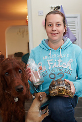 © Licensed to London News Pictures.  06/11/2013. OXFORDSHIRE, UK. <br /> <br /> Vicki White (pictured) holds a milk bottle containing a false widow spider surrounded by some of her pets including Poppy, a red setter (L), Abi, a 4 month old Chug (C) and an unnamed giant tortoise (R). <br /> <br /> Nursery manager Vicki White found the spider in the bathroom of her Chalgrove home after returning from holiday. After safely trapping it in a milk bottle she has added it to the family's large collection of animals. Vicki and her children own three dogs, four cats, two micro pigs, two giant tortoises, four turtles, two rats and one spider.   <br /> <br /> Photo credit: Cliff Hide/LNP