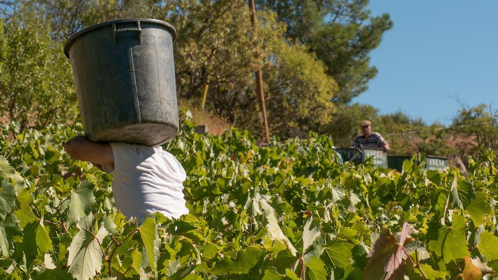 Adega Freixo de Num&atilde;o   foi fundada no ano de 1957 por um grupo de lavradores que viam as suas uvas cada vez mais mal pagas.<br /> <br /> A Cooperativa tem uma m&eacute;dia de produ&ccedil;&atilde;o de 3.000.000 litros de vinho das melhores castas e com uma qualidade por todos apreciados. Desta produ&ccedil;&atilde;o 50% s&atilde;o vinhos de Mesa e VQPRD e os outros 50% s&atilde;o vinhos generosos. Produz vinhos brancos e tintos mas a maior parte &eacute; tinto.<br /> <br /> Produz uma m&eacute;dia de 200 toneladas de azeite virgem extra considerado um dos melhores do mundo.<br /> <br /> Produz ainda um Licor de Uva &uacute;nico no mundo denominado &ldquo;Numantinu&rdquo; muito apreciado tanto como aperitivo com digestivo. Ter&aacute; que ser bebido fresco e se preferirem com uma casca de lim&atilde;o.