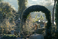 Ivy arch on a frosty winter's morning. Design: John Massey, Ashwood Nurseries
