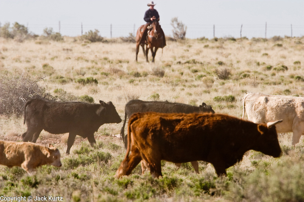 08 MAY 2004 -- WILLIAMS, AZ:   Cowboys drive cattle through a pasture on the Willaha Ranch, north of Williams, AZ, May 8, 2004. The ranch is in the high desert country near the south rim of the Grand Canyon. Arizona ranchers are in the midst of a ten year draught that has dramatically reduced the size of their herds. At the same time, public consumption of beef has soared because of the popularity of the Atkins and other high protein diets, so while prices are up, herd yields are down because of the drought.    PHOTO BY JACK KURTZ