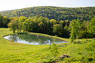 Spring foliage around a pond at  Firefly Farm, Hauverville, New York, U.S.A.