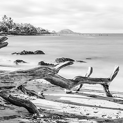 Mōkapu Beach with fallen tree driftwood black and white panorama photo in Wailea Makena Maui Hawaii. Panoramic photo ratio is 1:3. Copyright ⓒ 2019 Paul Velgos with All Rights Reserved.