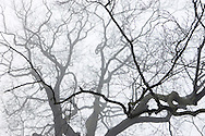 Copyright by Stefan Reimschuessel.All Rights reserved. No use without prior agreement and authorization..Tel: +44-7956-963749.email: reimster@gmail.com.<br /> Fog in Richmond Park, London.