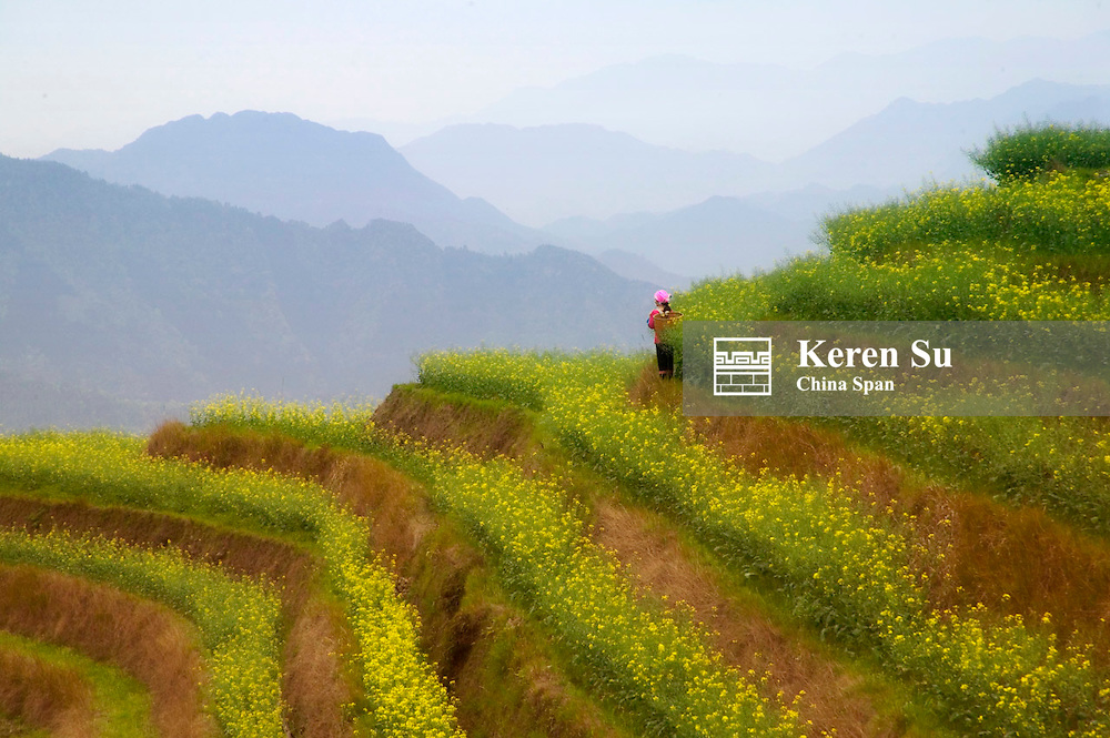 Zhuang girl with terraces of canola, Longsheng, Guangxi Province, China