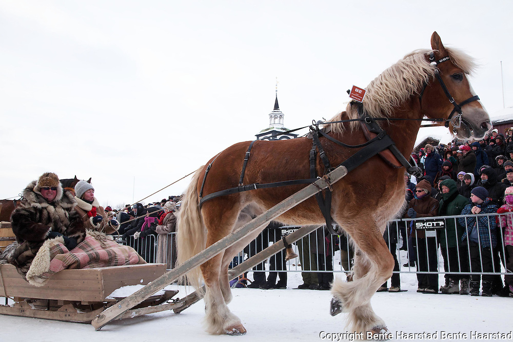 Over eighty equipages from Sweden, Østerdalen, Hedmark, Gauldalen and Tydal participate in a parade, after travelling for up to 15 days with horse and sleighs.