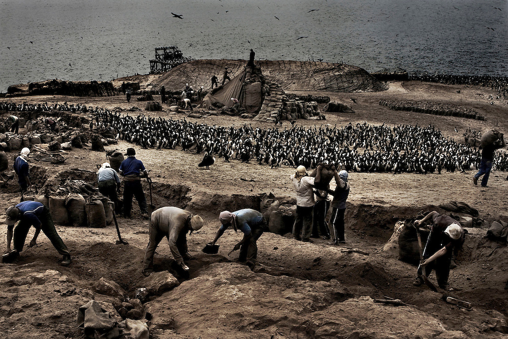 The Fallout of the Guano Fever, portraying the current movement of guano, a sad reflection of what once was a bonanza poorly taken advantage of.<br /> Guano is an organic fertilizer once found in abundance on more than 20 islands off the Peruvian coastline, where the dry climate preserves the droppings of seabirds.<br /> It was a treasure for the Incas, the cause of a war, and once a backbone of Peru&rsquo;s economy.<br /> Now as the world hungers for sustainable resources, bird excrement is once again as prized as gold.