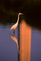 Stock photo of a crane in the reflecting pool at the San Jacinto Monument at the Houston Ship Channel in Houston Texas