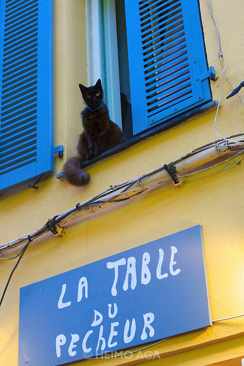 A black cat living right above the seafood restaurant La Table du Pecheur.