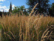 Canada Parliament as a background to the dry grass in the Major Hills park in Ottawa, on August 17, 2011.