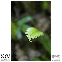 A variety of New Zealand's fern life, at Karori Wildlife Sanctuary, Wellington New Zealand.