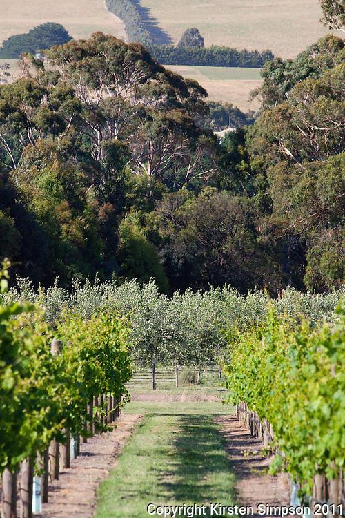 Babenorek Winery & Olive Grove