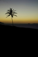 16 JAN 2006, CAMPANAS DE CIMA/FOGO/CAPE VERDE:<br /> Silhouette einer Palme im Sonnenuntergang, Insel Fogo, Kapverdische Inseln<br /> Silhouette Palm, Island Fogo, Cape verde islands<br /> IMAGE: 20060110-01-030<br /> KEYWORDS: Travel, Reise, Natur, nature, cabo verde, Dritte Welt, Third World, Kapverden