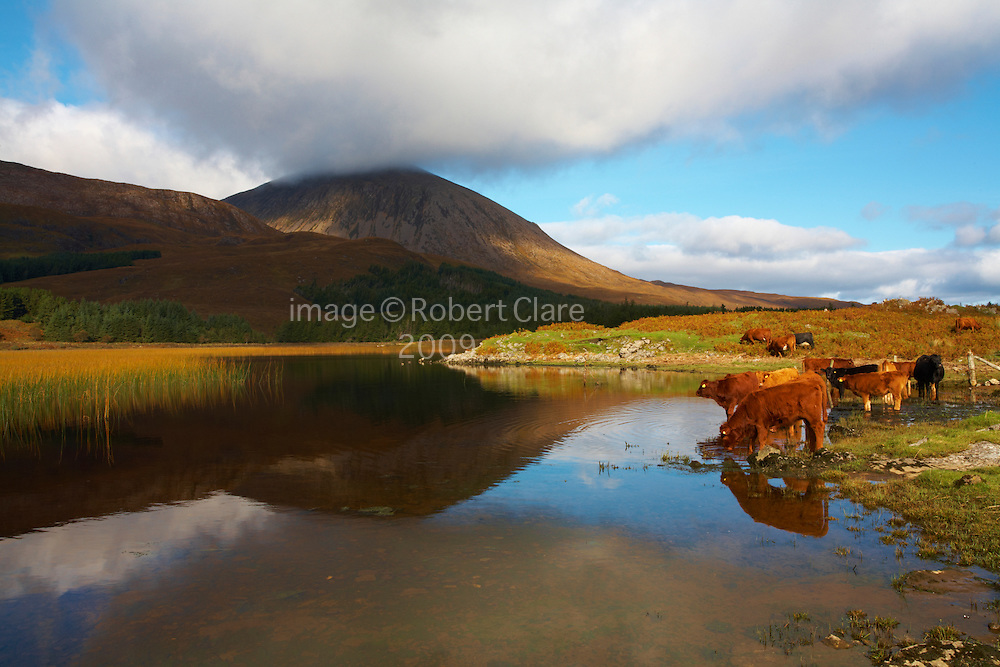 Scotland Isle of Skye Strath Suardal Loch Cill Chriosd looking across to Beinn na Caillich 732mtrs Cattle drinking