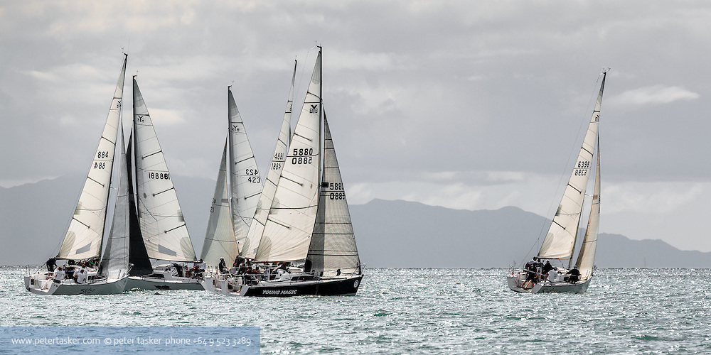 Yachts racing on Aucklands Waitemata Harbour, Hauraki Gulf, Auckland, New Zealand.