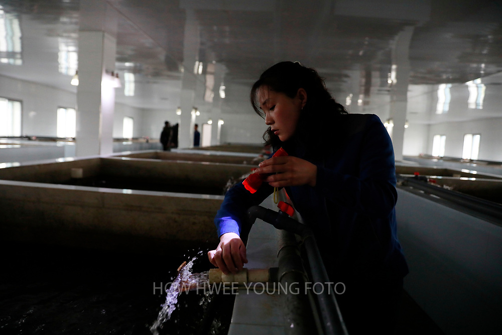 A North Korean worker performs checks with torchlight at a catfish farm in Pyongyang, North Korea, 17 April 2017. A North Korean missile exploded within seconds of its launch on the east coast on 16 April, South Korean and US officials say as tensions rise in the region over nuclear issues.