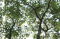 Blurred Treetops