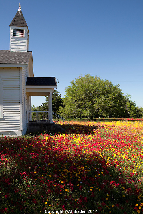 Coreopsis and Phlox at Cheapside Church, Gonzales County