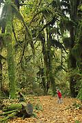 Hall of Mosses, Hoh Rainforest, Olympic Peninsula, Washington, USA<br />