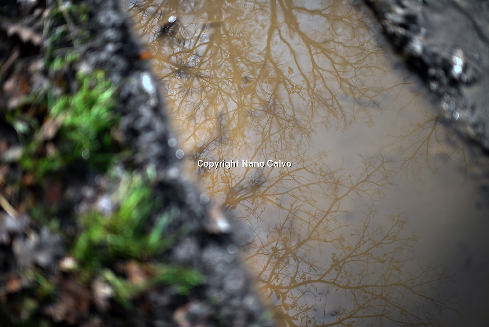 Trees reflected in pond of winter trail, Vigo de Sanabria, Zamora