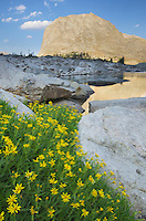 Mitchell Peak in the Cirque of the Towers, Yellow Aster wildflowers are in the foreground, Popo Agie Wilderness, Wind River Range Wyoming