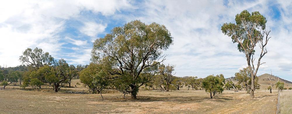 Outback just outside Canberra, Australian Capital Territory, Australia