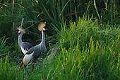 Africa Bird Stock Photos