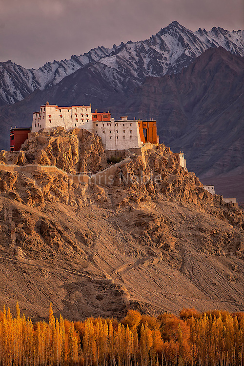 Thiksey Monastery illuminated by evening light above autumn trees in the Indus River Valley, Ladakh, India.