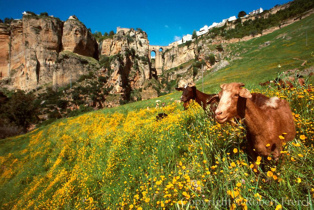 SPAIN, ANDALUSIA, RONDA historic 'pueblo blanco' above ravine