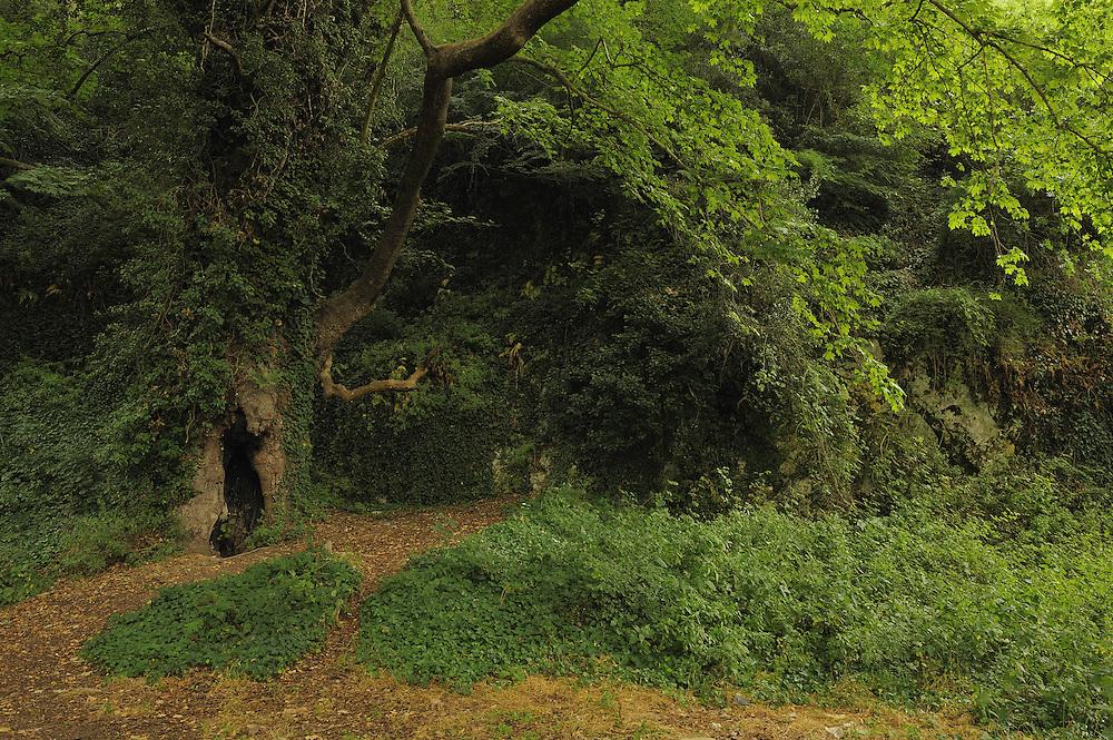 """Forest near the spring """"Syri i Kalter"""" (The Blue Eye). Albania June 2009"""