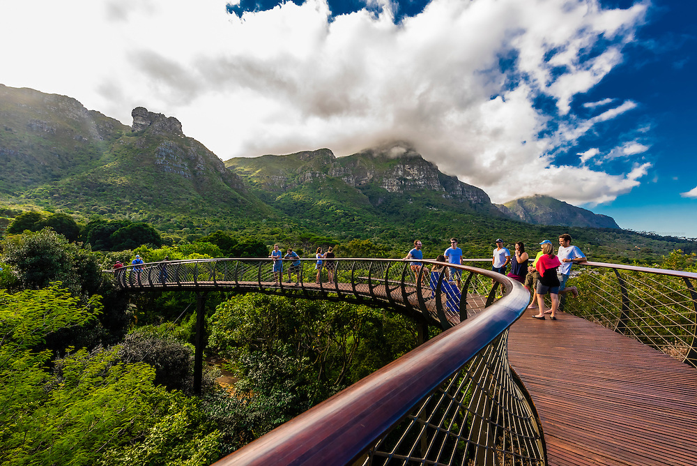 Tree Canopy Walkway, Kirstenbosch National Botanical Garden, Cape Town, South Africa. Table Mountain is in background.